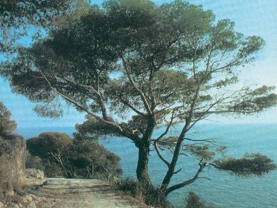 Cover Riserva Naturale Statale San Cataldo