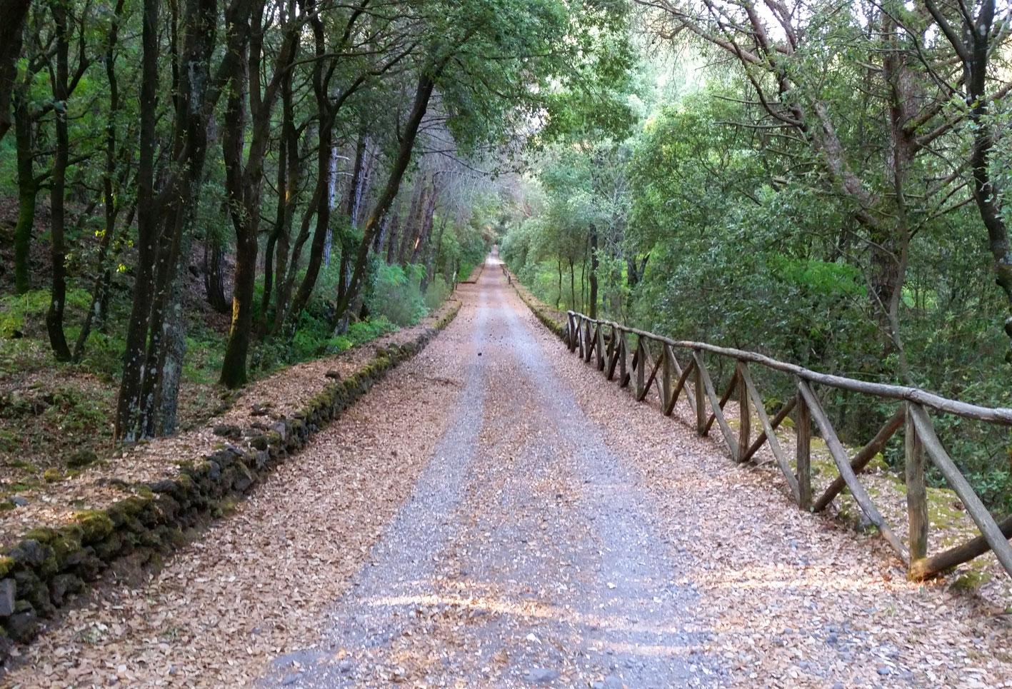 Cover Sentiero Riserva Forestale Tirone Alto Vesuvio e Laboratorio A. M. V.