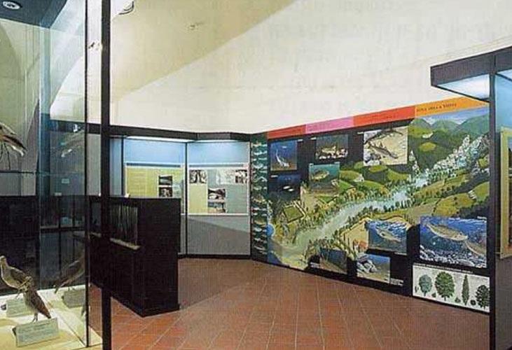 "Cover Museo di Scienze Naturali ""Luigi Paolucci"""