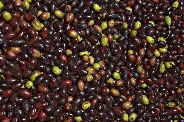 Cover Olive al naturale