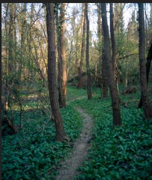 Cover Arboretum Taurinense