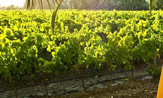 Cover Cantina e azienda vinicola Valle dell'Acate