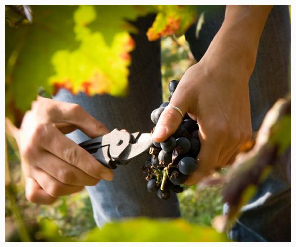 Cover Azienda vinicola Merenda con Corvi