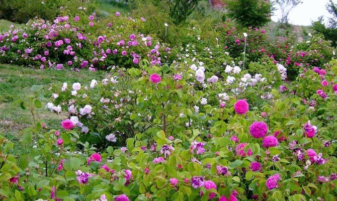 Cover Museo Giardino della Rosa Antica