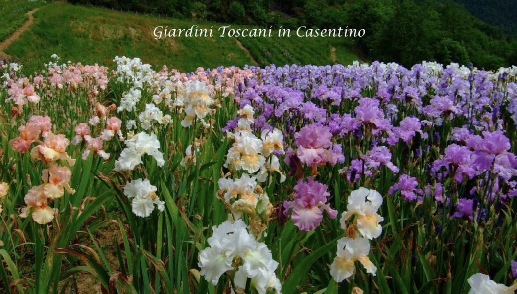 Cover Giardini Toscani in Casentino