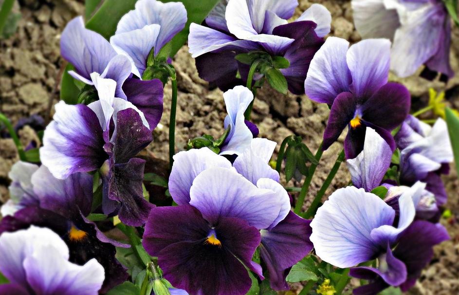 Cover Garden Burzio Eufrasia