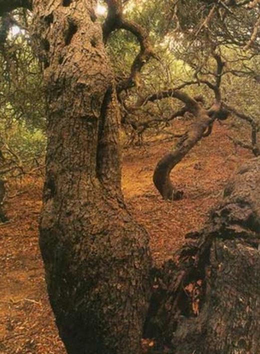 Cover I lentischi della Macchia Foresta del Fiume Irminio