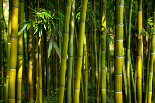 Cover Verde Bambù