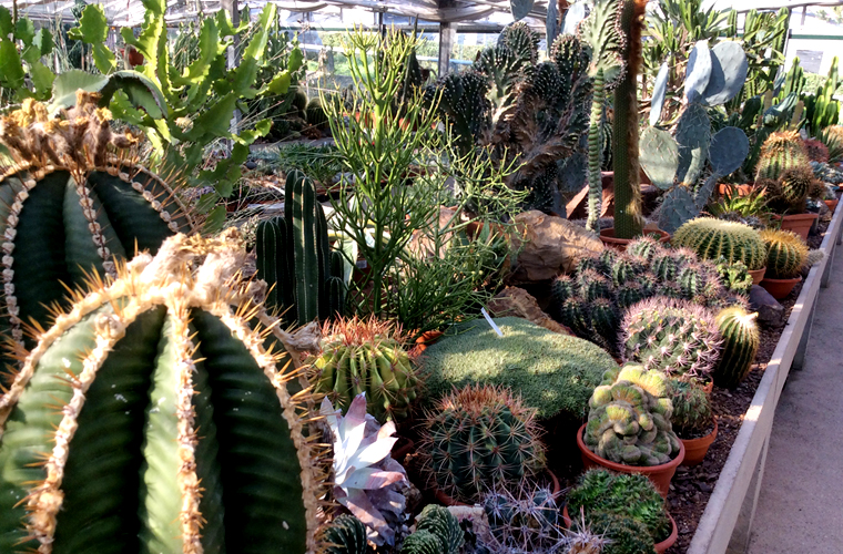 Cover Azienda agricola Stefano Colombo/Cactus Colombo