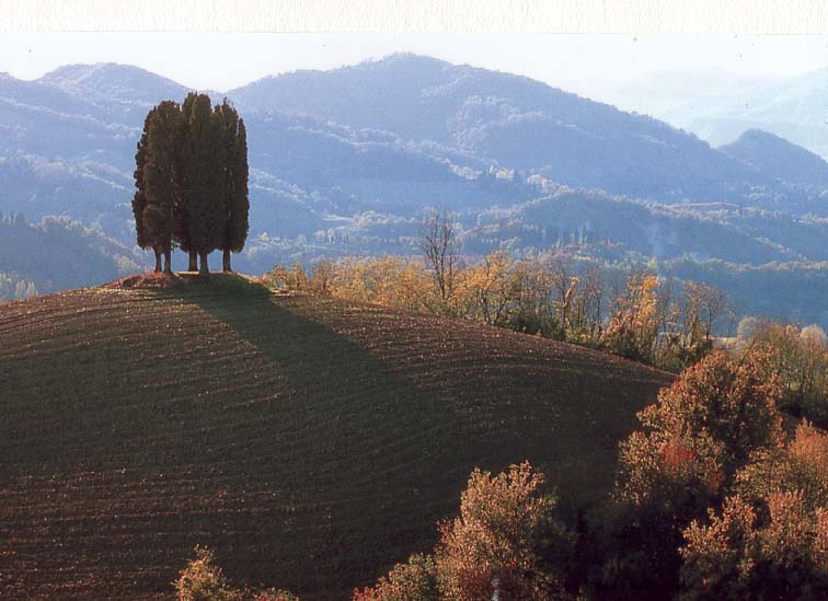 Cover Cipressi di Pianoro