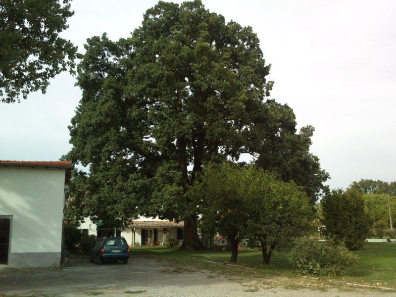 farnia basilicagoiano