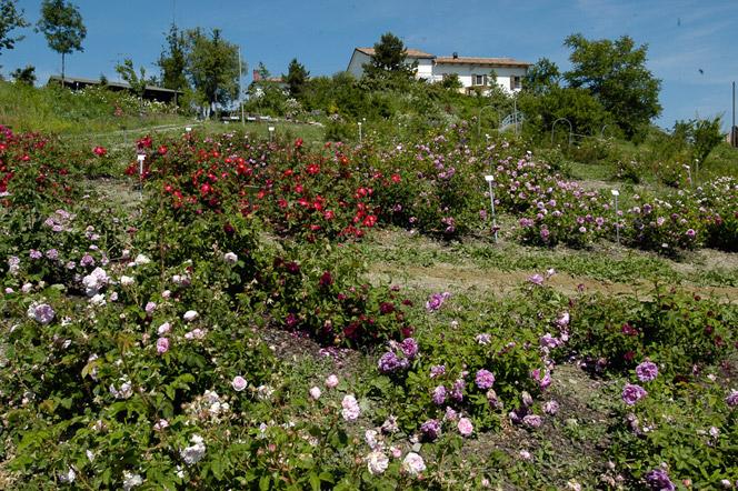 giardino-rosa-antica-2