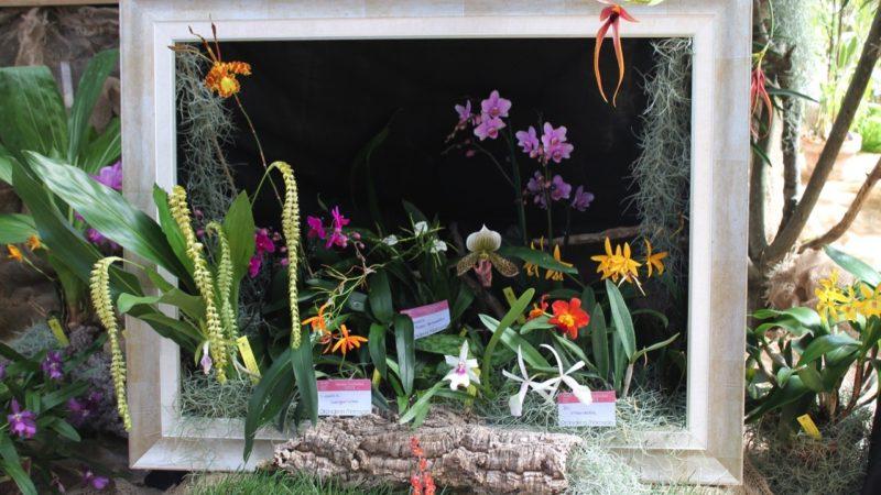Cover Orchideria di Morosolo