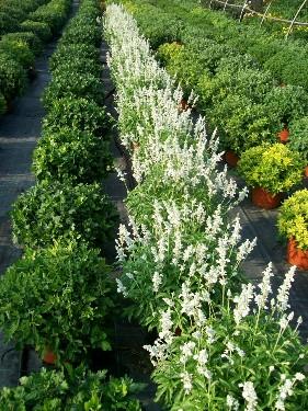 Cover Floricoltura Fenix