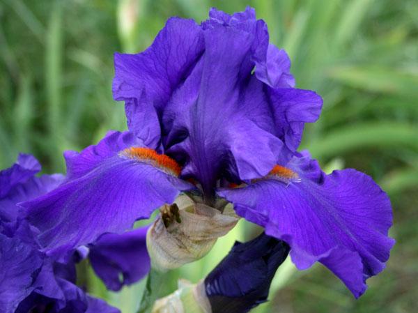 Cover Il Principe Iris