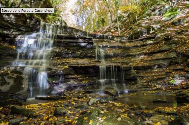 Cover Parco Nazionale delle Foreste Casentinesi – Bosco del Parco delle Foreste Casentinesi