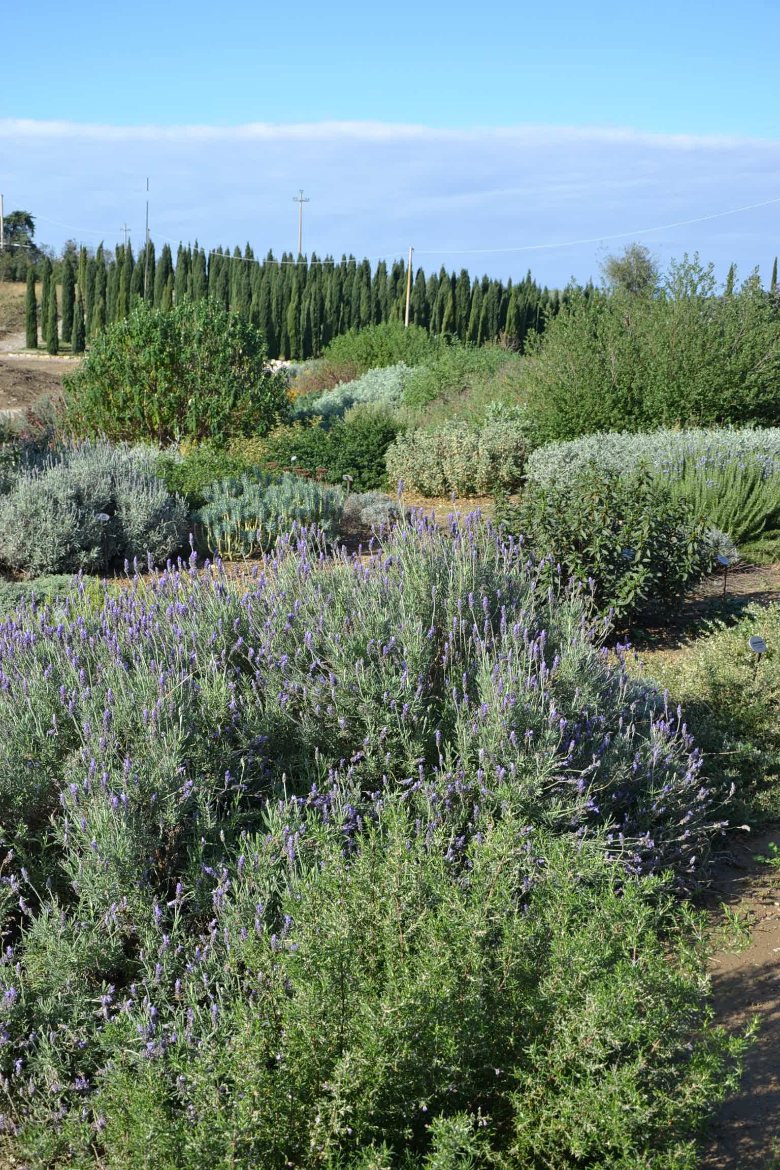 Cover Mates Piante Società agricola-Giardino senz'acqua/Dry Garden