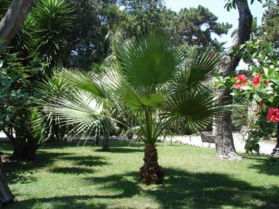 Cover Parco botanico di Villa Comunale Umberto I° di Reggio Calabria