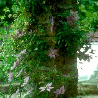 Cover Giardino Medioli