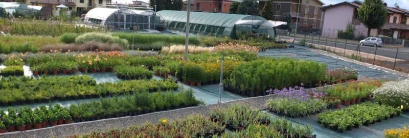Cover Un Quadrato di Giardino