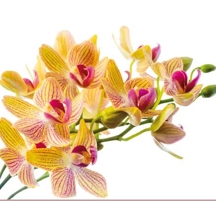Cover Floricoltura Luchetti
