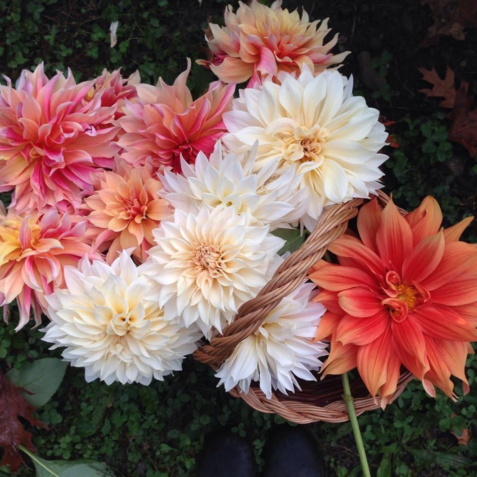 Cover Olga's Flower Farm