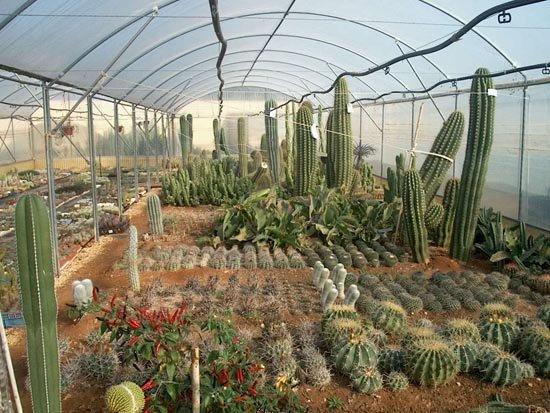 Cover Vivaio Scarascia /Scarascia Cactus