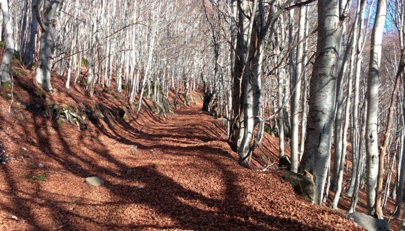 Cover Riserva MAB di Montedimezzo – Bosco di Montedimezzo, Foreste di Feudozzo e Pennataro