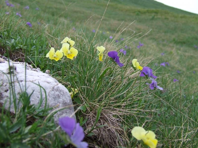 Cover Parco Nazionale dei Monti Sibillini