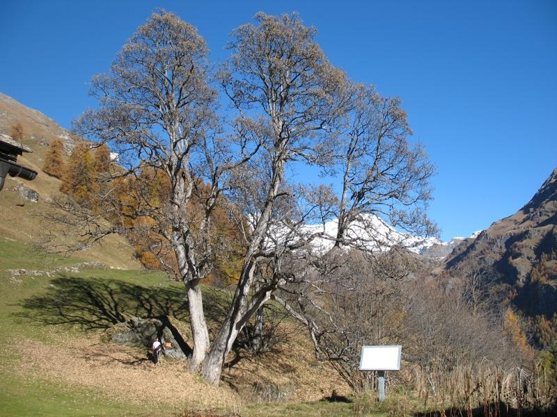 Cover Acero di Alpenzù