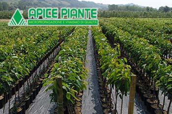 apice-piante-piazzale
