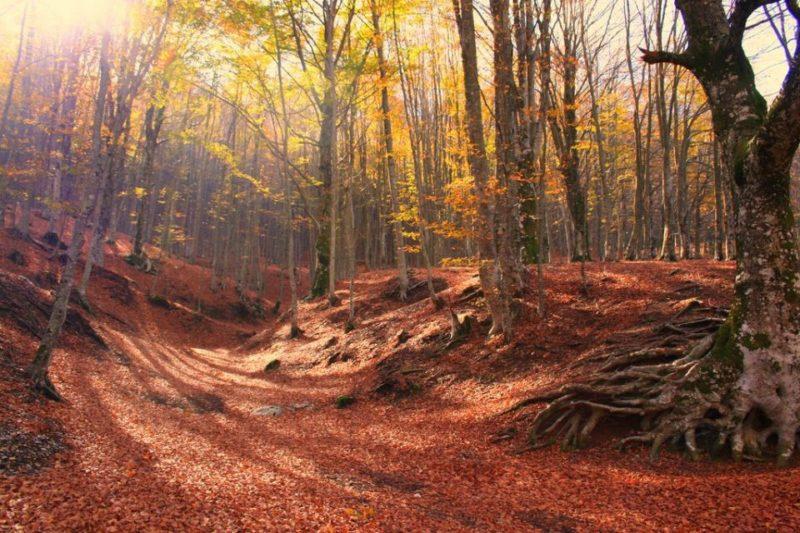 Cover Parco Regionale dei Monti Picentini