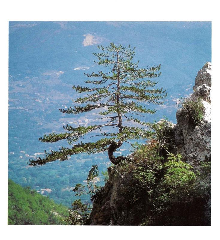 Cover Riserva Naturale e Oasi Valle della Caccia