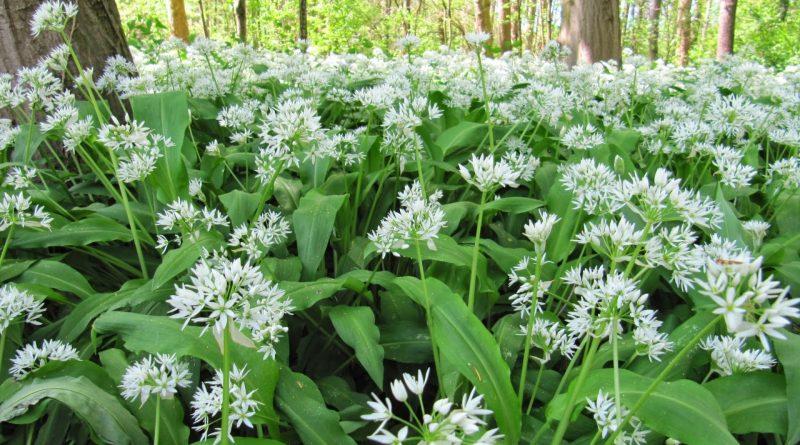 Cover Orto Botanico di Brera – Collezione di viole e fiori del sottobosco