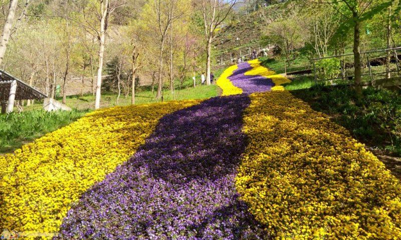Cover Giardini di Castel Trauttmansdorff – Collezione di viole e fiori del sottobosco