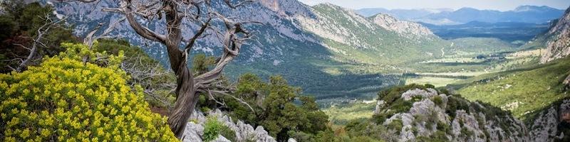 Cover Foresta di Lanaitho