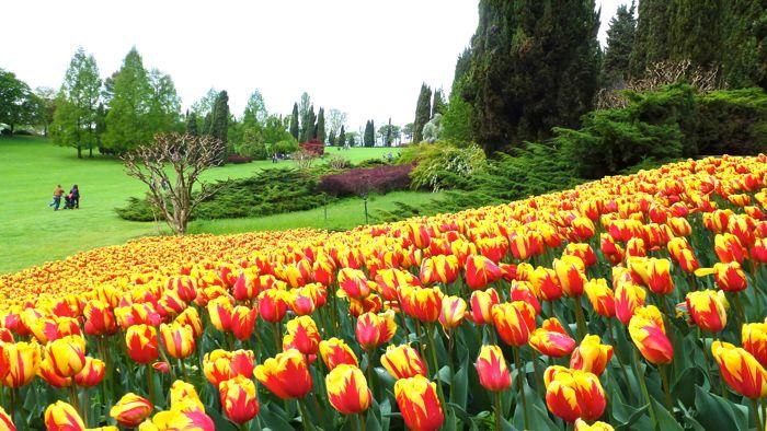 Cover Parco Giardino Sigurtà – Collezione di tulipani e bulbose