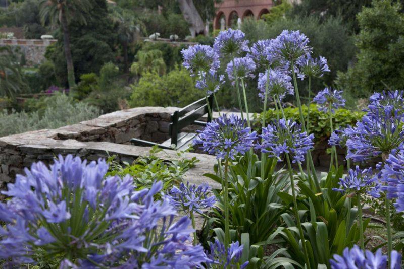 Cover Giardini di Villa Pergola – Collezione di agapanti