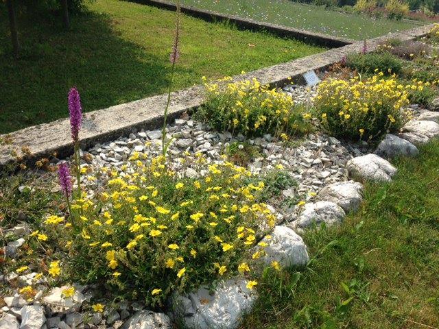 Cover Giardino Vegetazionale Astego – Collezione di Orchidee
