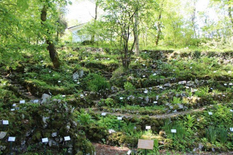 Cover Giardino Botanico Carsiana – Collezione di viole e fiori del sottobosco