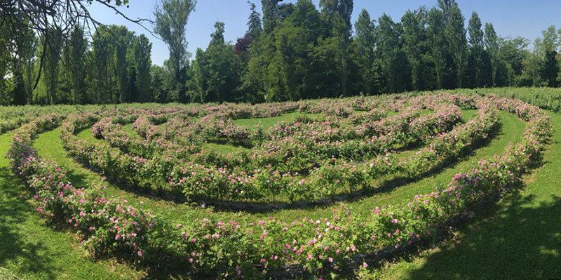 Cover Castello delle Rose di Cordovado – Collezione di rose