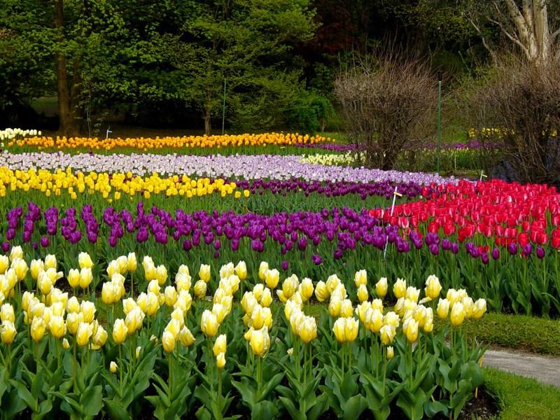 Cover Orto Botanico di Begamo Lorenzo Rota – Collezione di tulipani