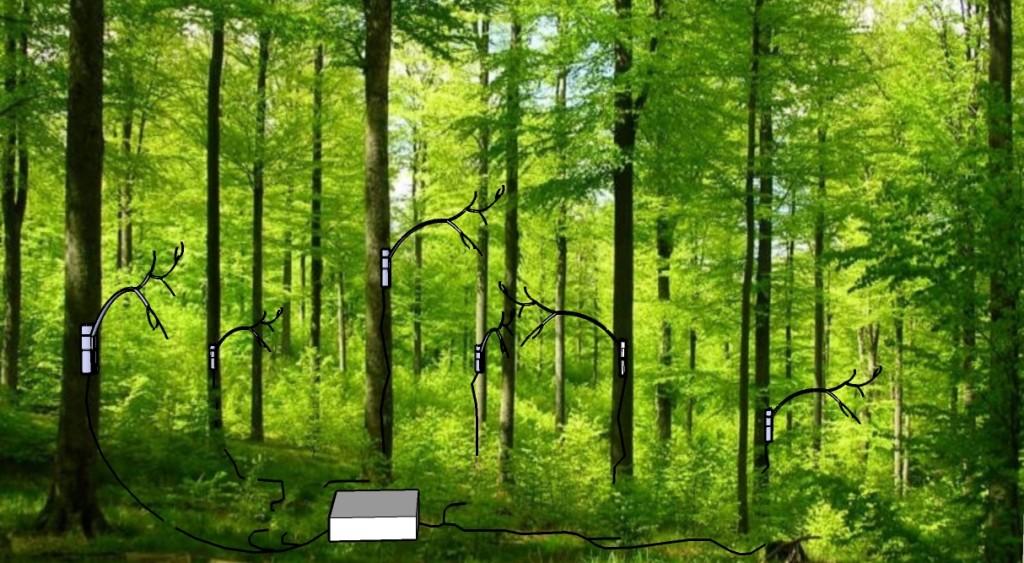 foresta-inclusive1-1024x563