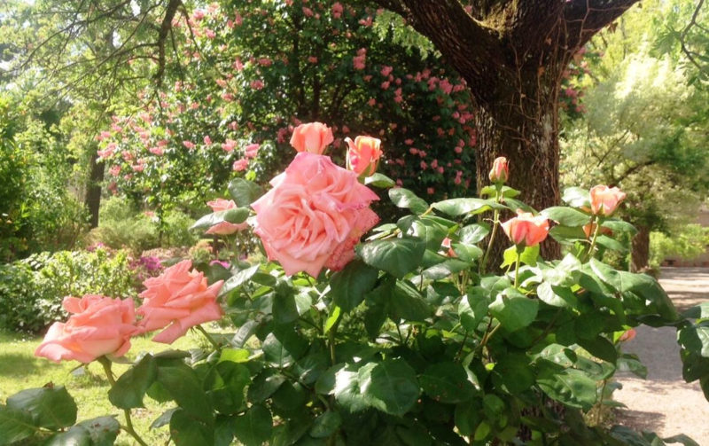 giardino-dei-semplici
