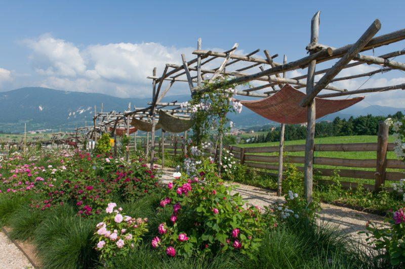 Cover Giardino della Rosa – Collezione di rose