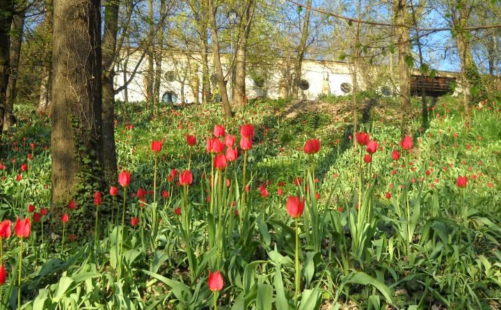 Cover Castello Reale di Govone – Collezione di tulipani spontanei
