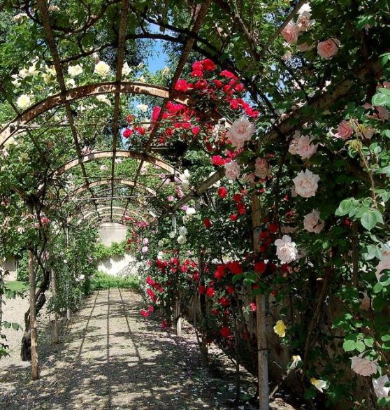 Cover Orto botanico di Pavia – Collezione di rose