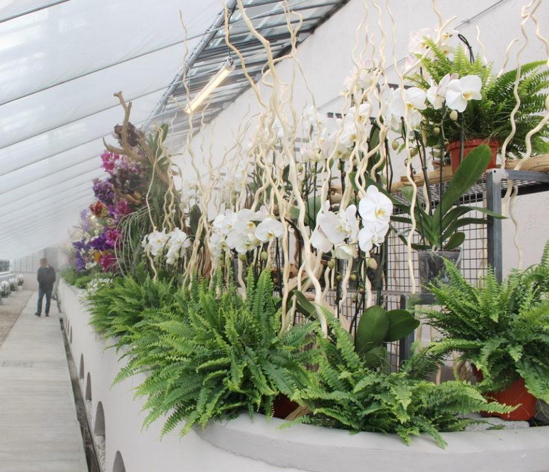 Cover Villa Visconti Borromeo Litta di Lainate – Collezione di orchidee