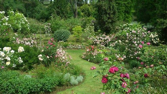 Giardini della landirana collezione di rose luoghi