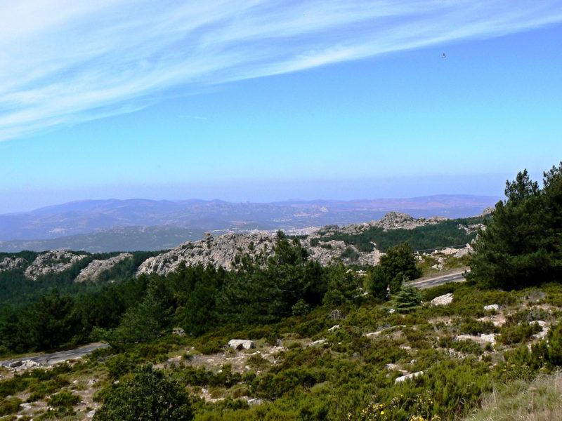 Cover Foresta demaniale del Monte Limbara Sud